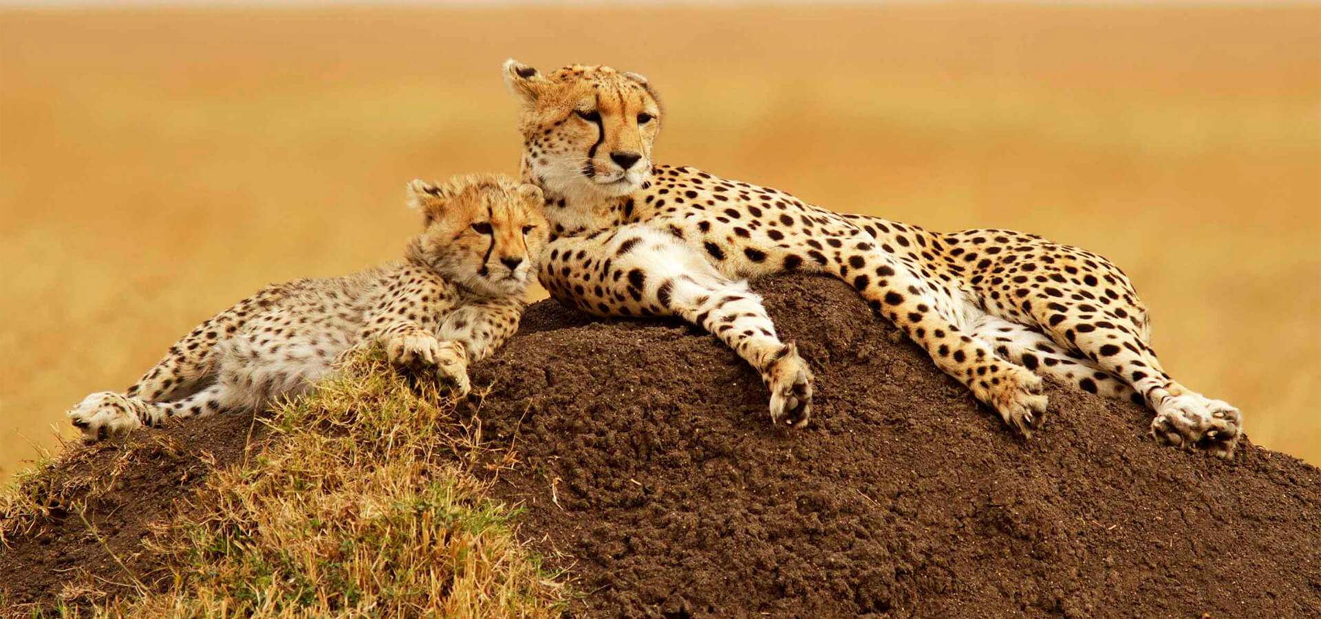 SAFARI EN SUDAFRICA x USD 1490